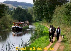 Cheshire Shire on the Canals