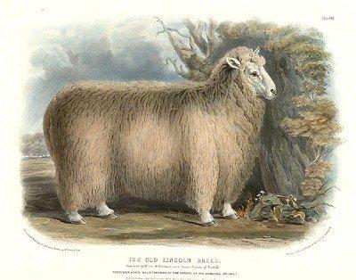 English Wool Trade
